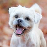 huisdieren fotografie herfst