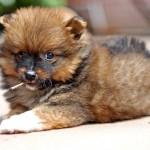 puppyfotografie