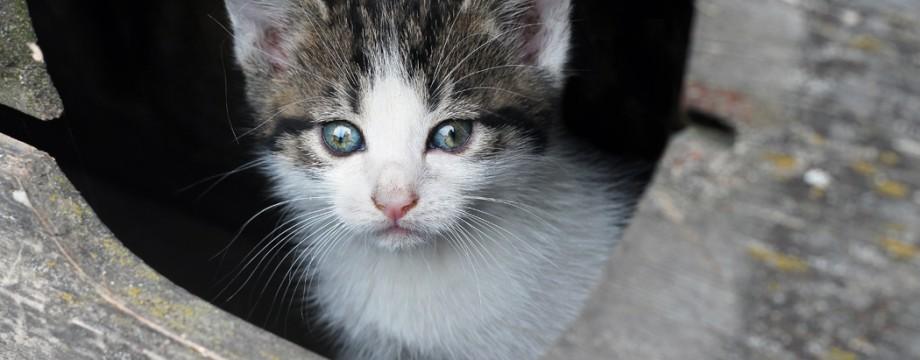 Kitten fotografie huisdieren