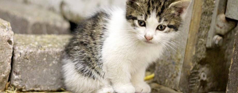 Kittens fotografen