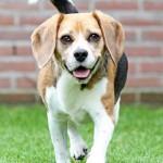 honden fotografie