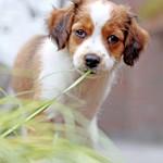 puppy fotografie